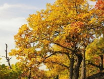 16.Kouzlo podzimu
