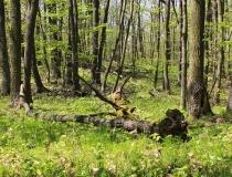 33.Jaro v dubovém lese