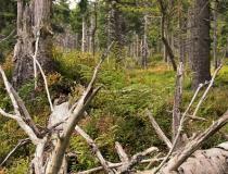 42.Lesní zátiší