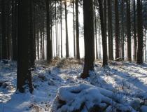 58.Zima uprostřed lesa
