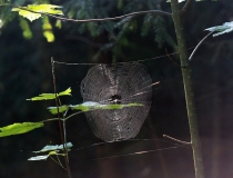 45.Pavoučí výtvor